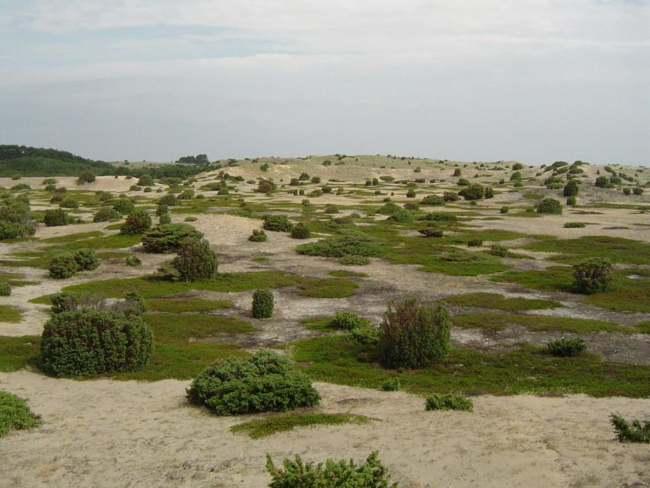 Púšť naostrove vBaltskom mori?