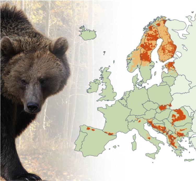 výskyt medveďa mapa