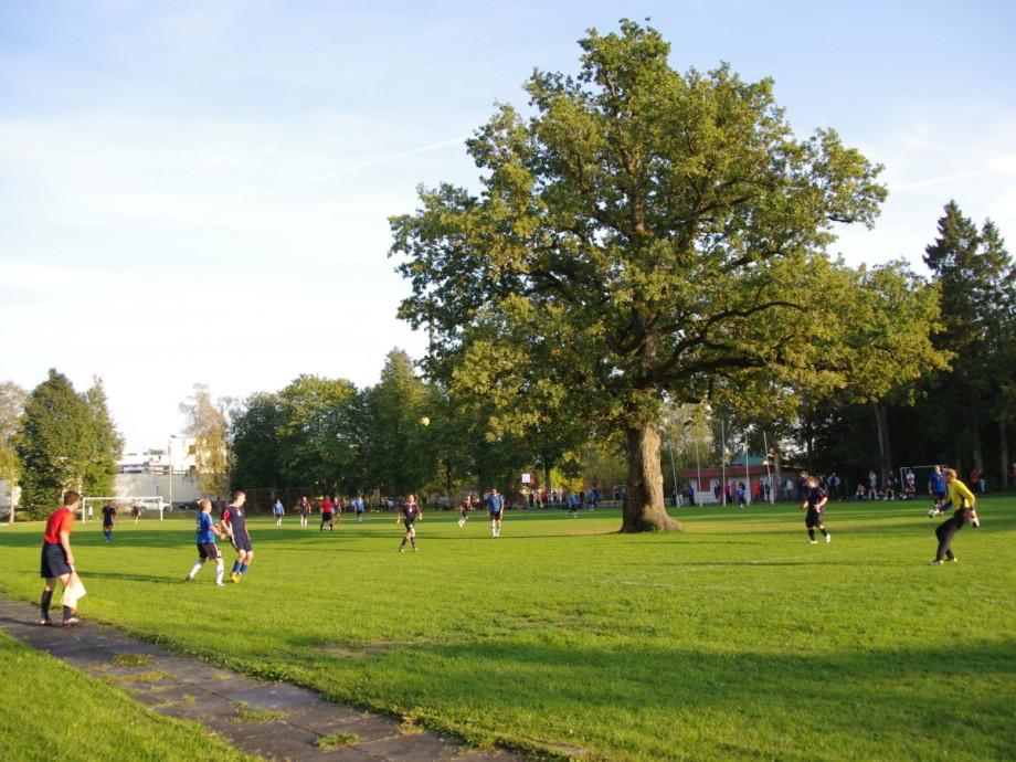 Európskym stromom roka je dub nafutbalovom ihrisku