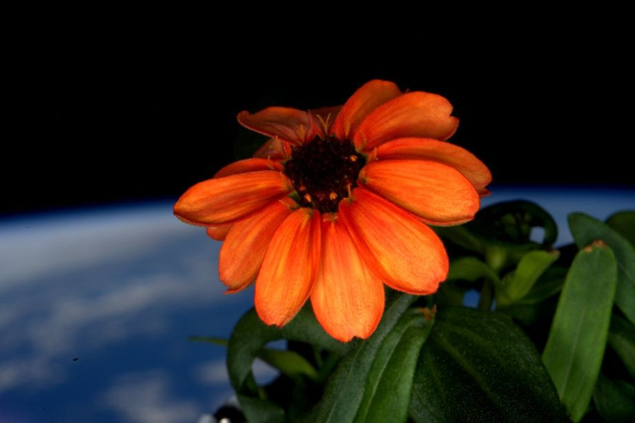 Vesmírny kvet
