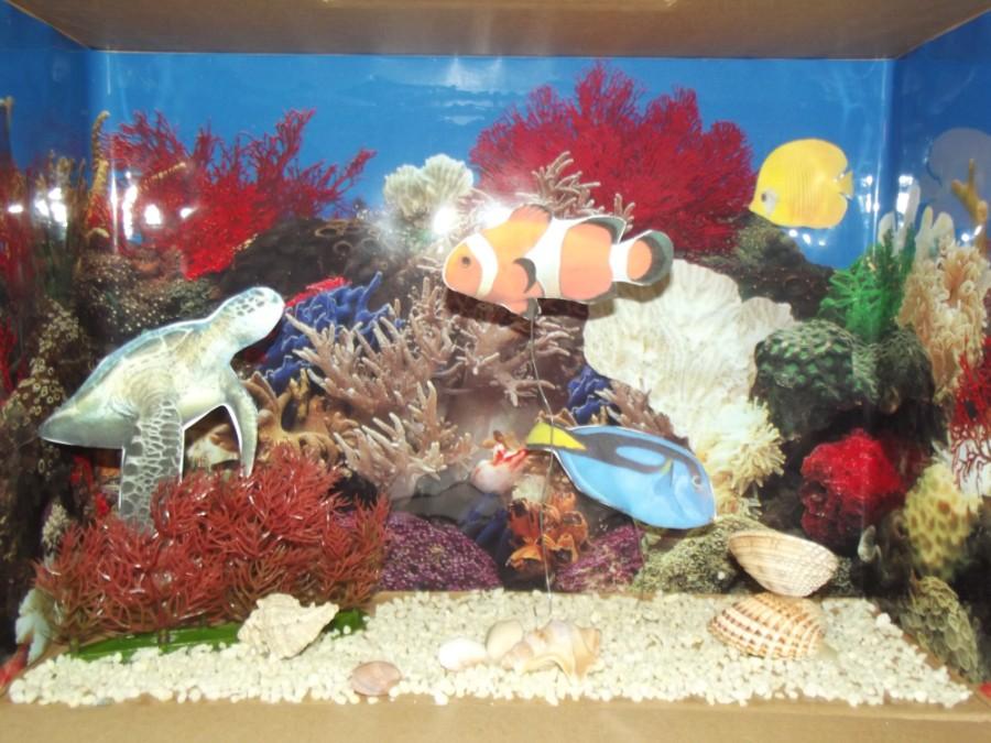 koralový útes školský projekt