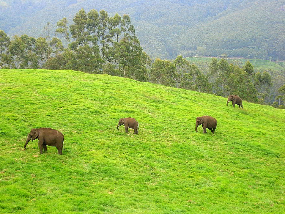 Divoké slony Ázie