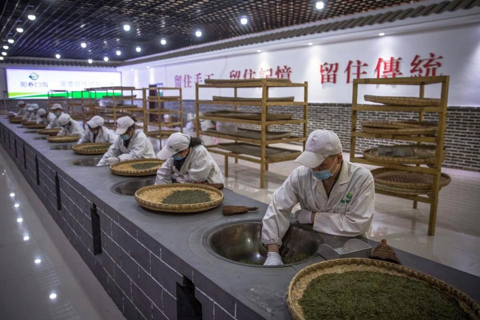 Ako sa rodí čínsky čaj