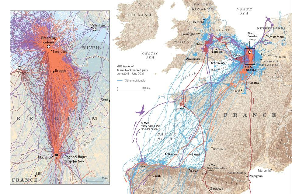 Zvierací cestovatelia. Mapy, ktoré zmenia váš pohľad napohyb živočíchov