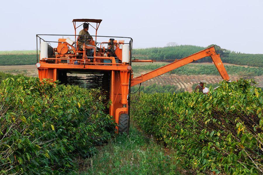 zber kávy pomocou strojov