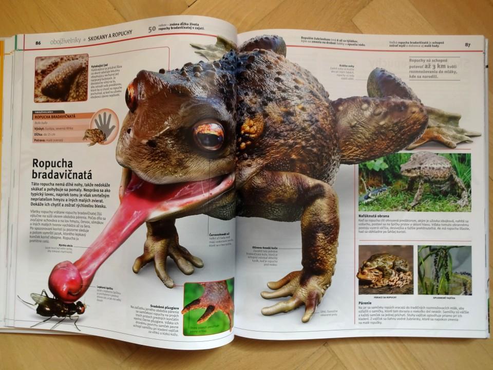 živočíchy v kocke detská encyklopédia