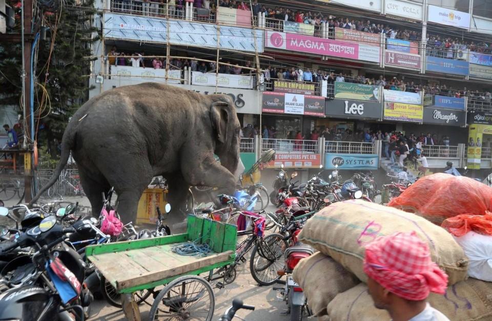Keď sú slony nebezpečné