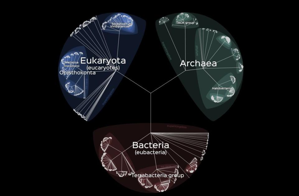 Mapa života