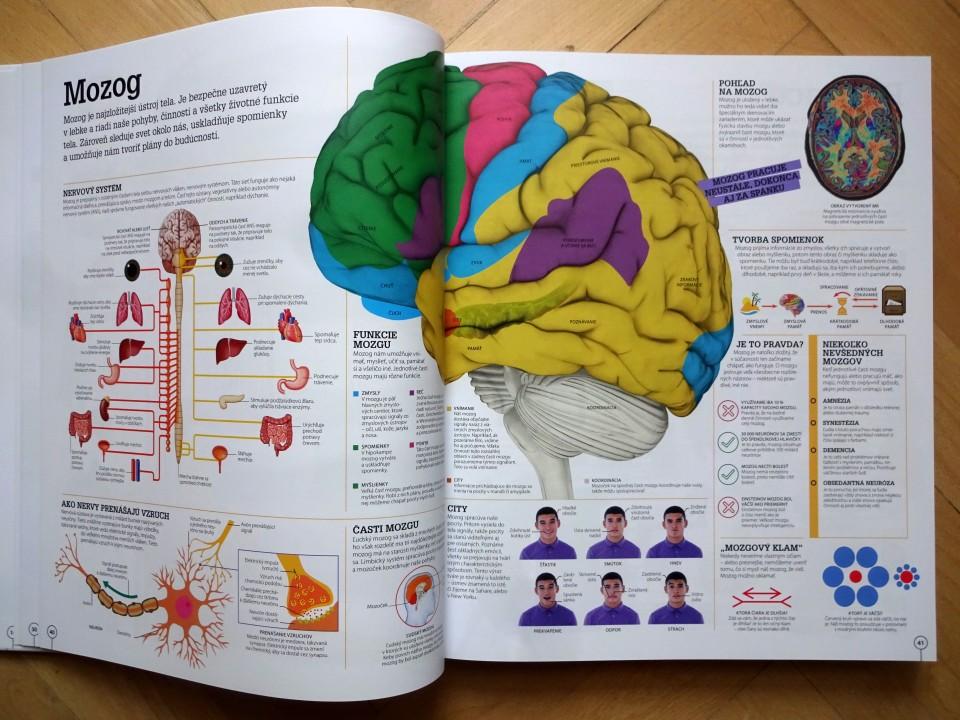 mozog encyklopédia