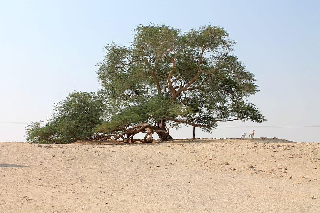 Sám uprostred púšte –strom života vBahrajne