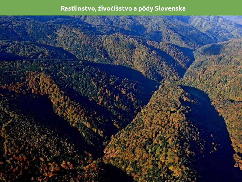 rastlinstvo, živočíšstvo a pôdy Slovenska prezentácia