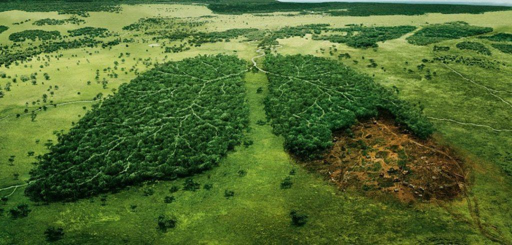 pľúca Zeme