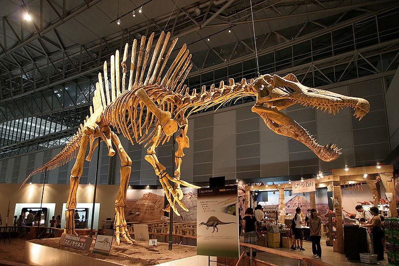 dinosaurus v múzeu