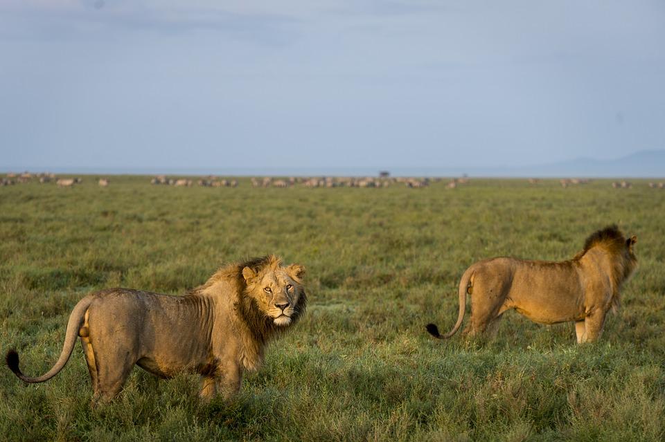 živočíchy Afriky